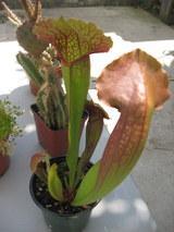plantman1001