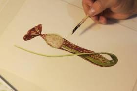 Nepenthes Copelandii Watercolor | Botanical Art