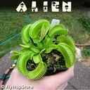 Alien in September