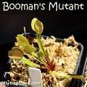 Boomans Mutant 2