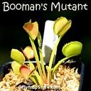 Boomans Mutant 1