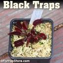 Black Traps 1