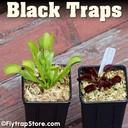 Black Traps 2