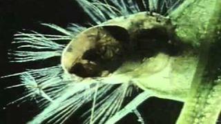 Vincent Price hosts Death Trap (3 of 4)