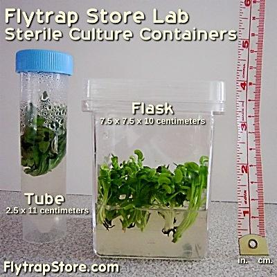 Flytrap Store culture containers and sizes