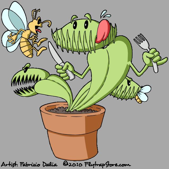 Seed-Grown Venus Flytrap