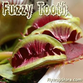 Fuzzy Tooth