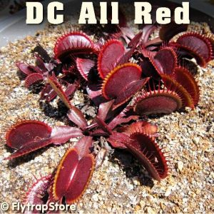 DC All Red Venus Flytrap