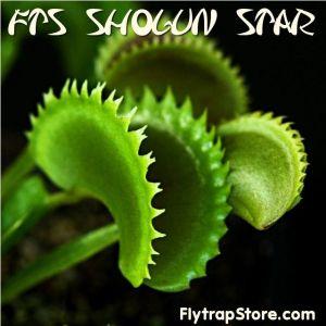 FTS Shogun Star