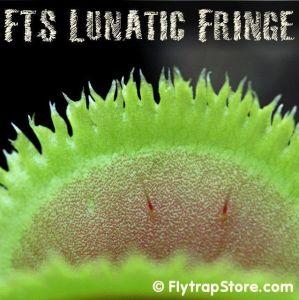 FTS Lunatic Fringe