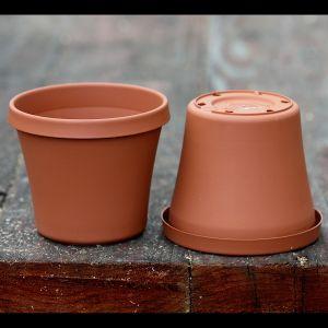 Plastic terracotta 4-inch pots for Venus flytraps