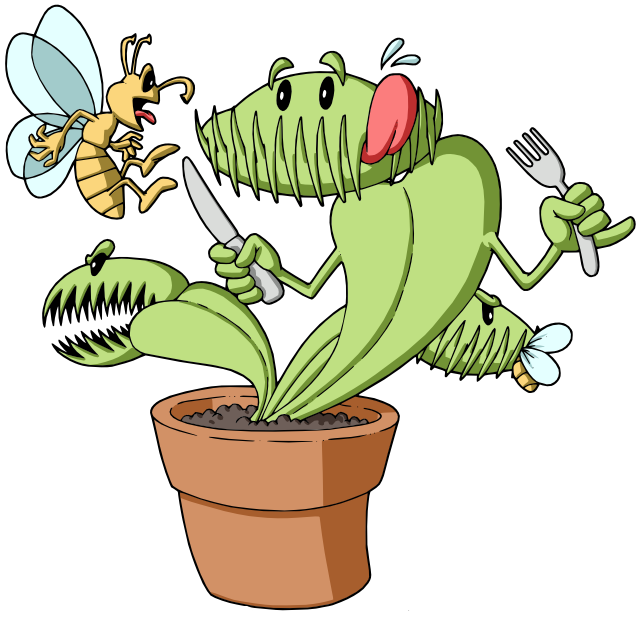 Venus Fly Trap - 5 Small Plants