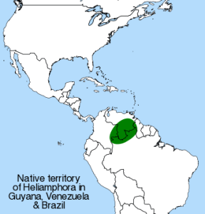 Geographical distribution of Heliamphora