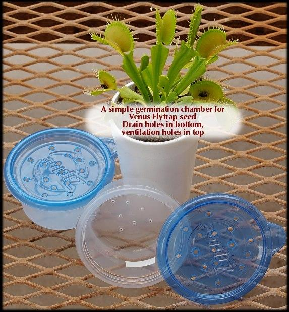 Venus Fly Trap Seed Germination Container