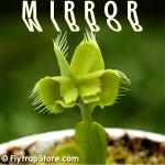 Mirror Venus Fly Trap