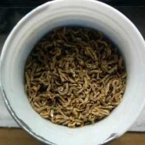 Dehydrated Blood Worms