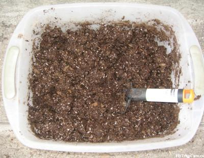 Venus Fly Trap Soil