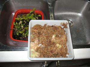 Flat plastic container lined with long fibered sphagnum moss